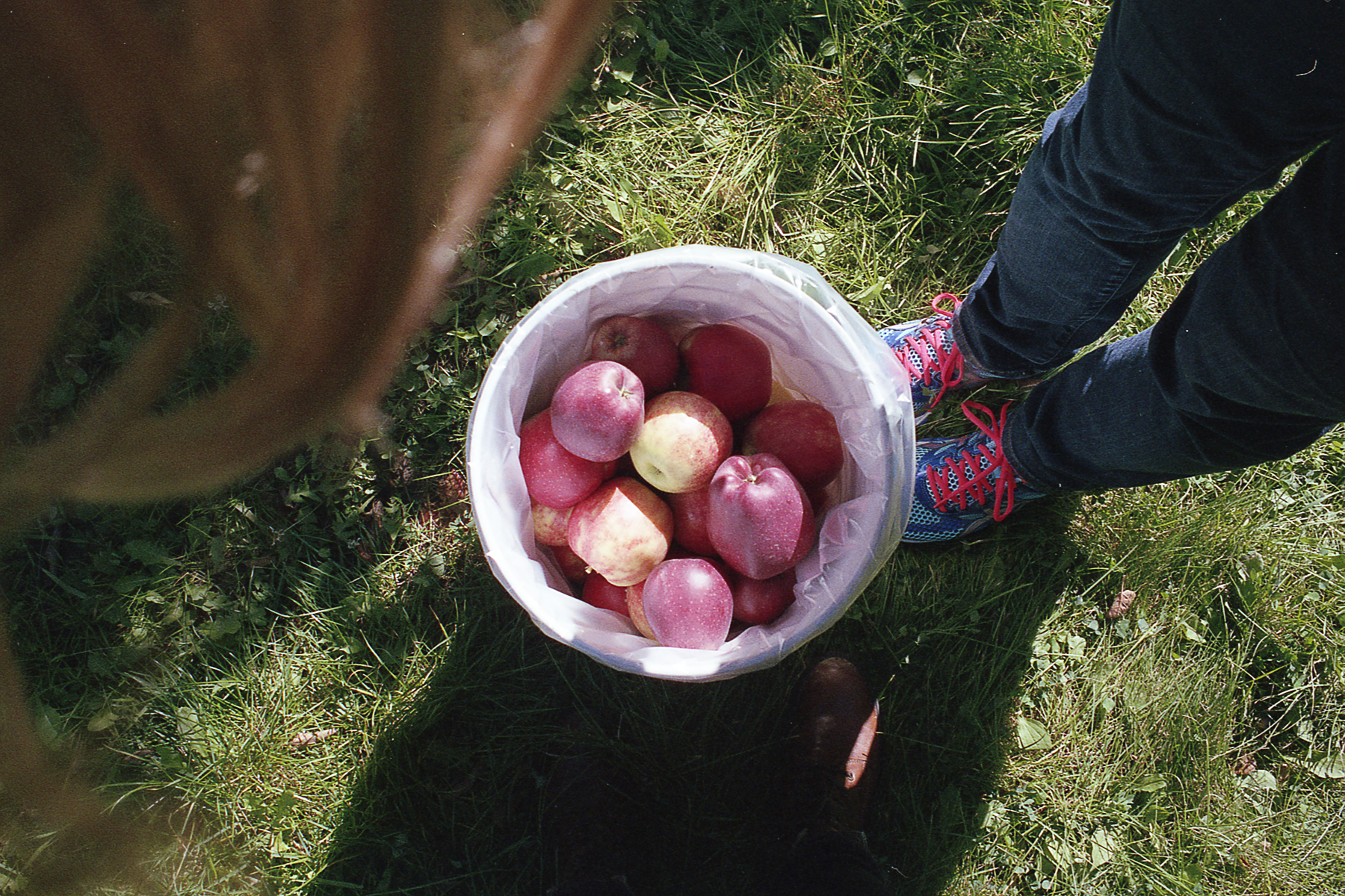 Apple Picking NY