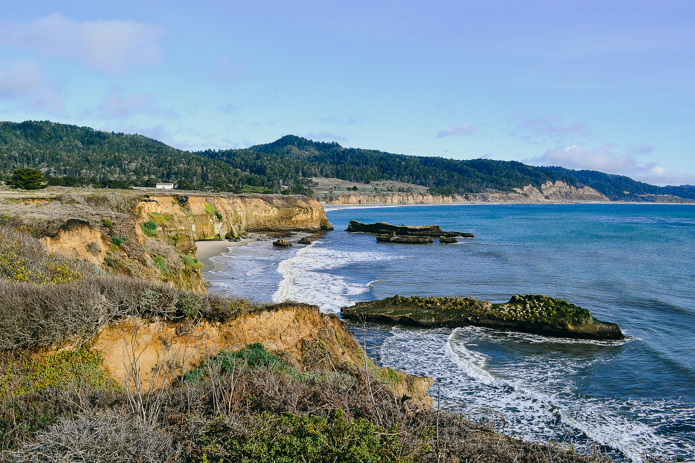 Año Nuevo State Park - California | On Flights + Feasts